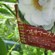 スイカズラの花が。