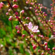 朝の散歩・南コース・春の花--道野辺八幡宮往復1時間