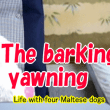 The barking, yawning 吠えるしあくびするし?