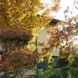 アカゲラを迎えるシャラの木