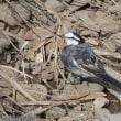 何時もの見慣れた鳥たち
