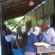 援農ボランティア「木成り完熟梅拾い」してきました。