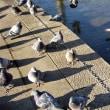 氷上の鳩 しあわせの村にて