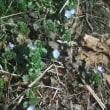 2月16日畑の雪は無くなりました、露地もの生育不良