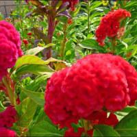 猛暑の中の花