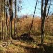 雑木林の倒木を片付ける