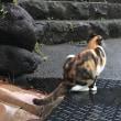 熱川温泉ネコ歩き