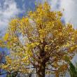 銀杏の葉、祈りと紐帯