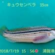 笑転爺の釣行記 7月19日☀ 久里浜・浦賀