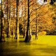 11月15日(水)の聖言