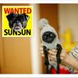 #迷子犬サンサン 探してます