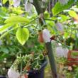 野菜苗と花