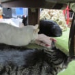 猫暖房完備でつ