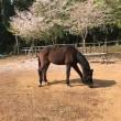 馬と散る桜