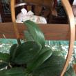 ランと観葉植物