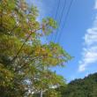 11 第11回安芸太田ウォーキング大会(もみじウォークin深入山)(続き)  昼食後の再スタ-ト