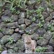 金爪石のステキ猫さん~台湾~