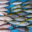 釣り旅行沖縄県真生丸