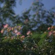 ピークのヒガンバナ畑、キンギンモクセイ、シャドーアート展
