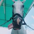 馬の仕事につくために アニベジ奮闘記 エピソード265