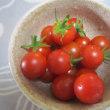 プチトマトを収穫する!