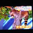 10/19 赤坂にアライグマ