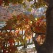 11月18日 上会津屋の紅葉情報