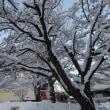 雪景色・・・大雪