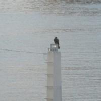鳥たちも朝から大変!