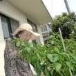 7月27日(木)曇り 利用者6名 ペダル漕ぎ・ミニ菜園野菜収穫