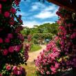 2018 青空の下バラの甘い香りが辺りに漂い 2 《福岡市東区海の中道海浜公園》