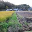 今年の稲刈り完全終了です