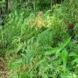 松とヤブコウジを残して草刈でした(^_-)-☆