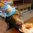 銀ちゃん、1歳の誕生日♪
