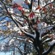 いきなり大雪警報 その2 鶴岡公園周辺