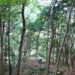 酷暑の夏と森 (7月28日)