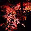 紅葉ライトアップ(●^o^●)