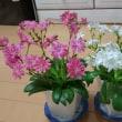 東日本大震災から7年 3.11という日