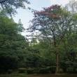 兼六園にある「キササゲ」の実‥等の植物