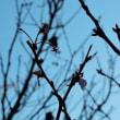十月桜1.20