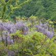 山に咲く花々