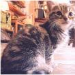 「世界ネコ歩き」より