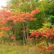 紅葉が 始まりました ♪