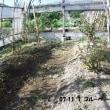 プチブルーベリー園