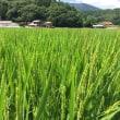 ◇8月発送◇特別栽培米◇
