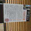 大赤亀+(レプリカ)
