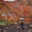 京都山科の「毘沙門堂門跡」へ。ここも紅葉キレイでした。