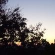 昨日の晴れ渡った夕空。
