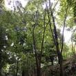 雨の中の林