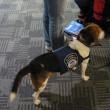 デトロイト空港の麻薬捜査犬